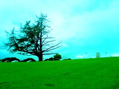 Tree of the 1/2 life (EXPLORED) (~Haani~) Tags: newzealand tree cars nature grass auckland haani thatsclassy 12life