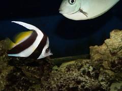 PA143539 (shayoctave) Tags: sea fish tan shay