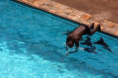 Hotel Des Mille Collines (Tomas F) Tags: pool swimming dive kigali rwanda mille collines