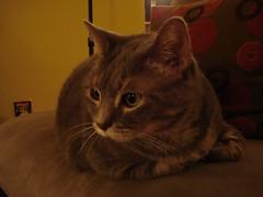 Photo of my cat Samantha