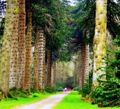THE FOREST TRAIL. (Edward Dullard Photography. Kilkenny, Ireland.) Tags: wood kilkenny ireland forest photographic woodstock emeraldisle breathtaking dullard edwarddullard societyedward