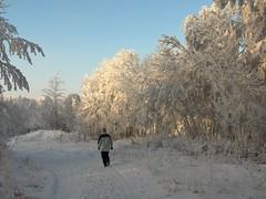 Trees covered with ice crystals from hoar-frost. (Bienenwabe) Tags: trees hoarfrost twigs icecrystals winterday blueribbonwinner rauhreif