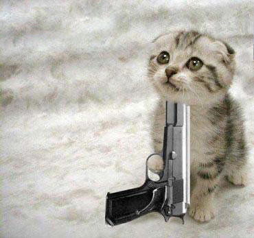 cats with guns. cat with gun