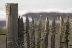 Une barrire... inutile ! (nathaliehupin) Tags: mer france novideo ambleteuse wimereux photographebruxelles nathaliehupin photographeluxembourg photographehainaut photographenamur photographeliege photographemons photographebelgique wwwnathaliehupinbe wwwnathaliehupingraphismebe