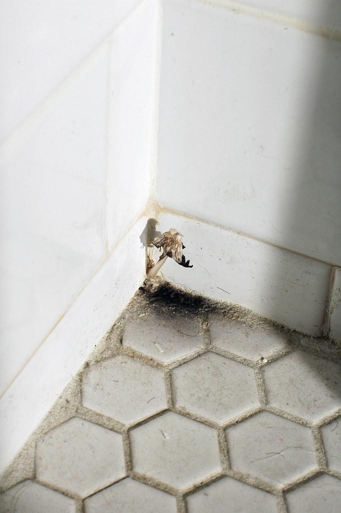 bathroom mushroom