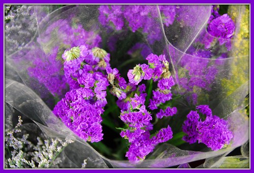 Purple Flowers...