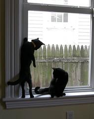 080210 kitten window