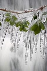 icicles (Steve Barnett) Tags: winter ice icicles