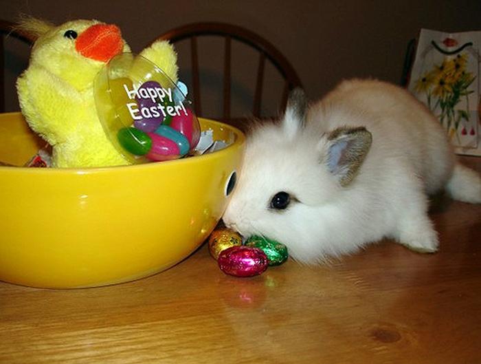 cuuuute-bunny
