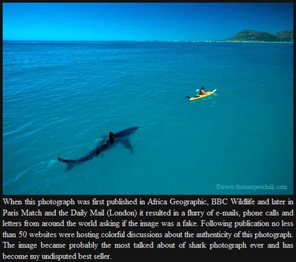 Shark Kayak