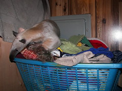 In the clothes basket