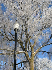 I love trees! (Blondieyooper) Tags: winter snow tree ice uppermichigan negaunee