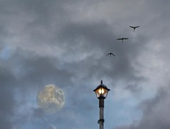 Follow the light! (Jumpin'Jack) Tags: street sky moon lamp clouds evening flying geese long exposure dri msh overthe msh1108 jpingjk goldstaraward wildgeesethatflywiththemoon msh110813