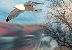 gull able, perhaps, to dream (eclectio) Tags: eclectio collage dream dreamlike dreaming gull journey awardtree artdigital