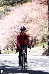 2017-02-18 武陵農場 (Steven Weng) Tags: 武陵農場 台灣 taiwan 櫻花 flowers canon eos1ds2 70300 腳踏車 自行車