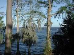 lake story 009 (shankargallery) Tags: landscapes nikon piers northcarolina lakeside spanishmoss lakescapes lakewaccamaw shankargallery richardlazzara clustershotcom