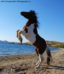 Wild Horse (Julie Georgantidou) Tags: trees sea wild horse beach nature jump rocks wind indian riding pony rodeo rider