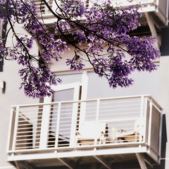 our front yard (beryl) Tags: eastvillage square downtown purple sandiego balcony squarecrop homesweethome jacarandatree nikond90