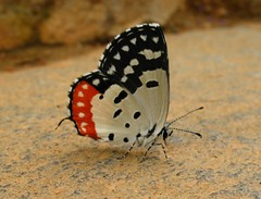 IMG_3711 (Canon_Guy) Tags: canon butterfly poweshot a640