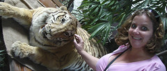That's a stuffed animal, next to the tigress