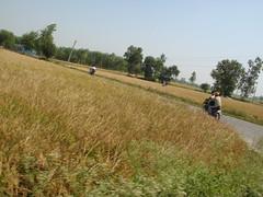 Singh on loh turang (guri_inder) Tags: bikes sahib punjab singh khet ropar chamkaur