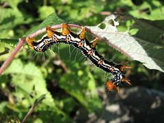 IMG_7266 (kobayan54) Tags: 虫