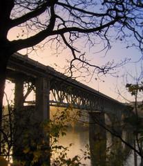 1926 (Erik Hovmiller) Tags: bridge tree oregon river portland island ross powell willamette us26