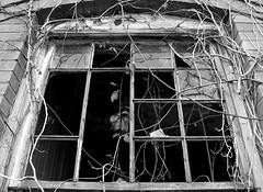 Popash School (tantrum_dan) Tags: school bw building abandoned broken window florida olympus e500 wauchula popash tantrumdan tantrumimagery