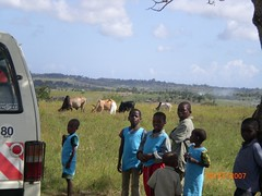 Children and cattle in Galana