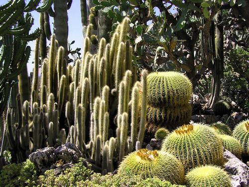 Fotografije kaktusa 2059297348_95bcba7150