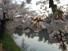 200705_522 (keis_0518) Tags: aomori sakura hirosaki