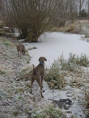 Exploring the ice 20/12/07