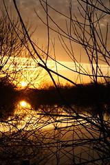 Through the Branches (torimages) Tags: glastonbury somerset sd allrightsreserved liquidgold ukenglandgreatbritainsomersetlevelssunriseearlymorningwinterfrostreallycoldorangeorangelightfrozenwaterreflection donotusewithoutwrittenconsent copyrighttorimages