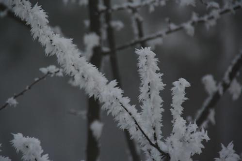 iarna in parc
