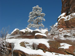 Waiting for the Warmth of the New Year (Sandra Leidholdt) Tags: schnee winter usa snow mountains tree