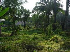 YWAM, Rajshaji (Will Bothel) Tags: ywam mossy rajshaji