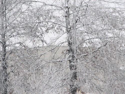 feb08_snow_02