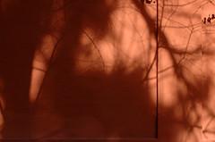 """Sombras sobre muro rojo. Reales Alczares. Sevilla (""""GALBA"""") Tags: muro pared sevilla rojo sombra alcazar abstracto galba abstraccion gonzlezalba"""