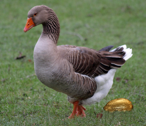 Goose that lays golden eggs