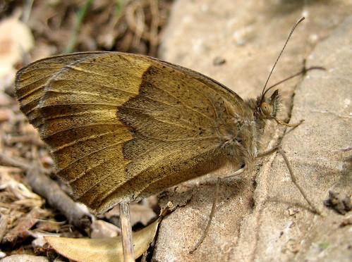 butterfly Sierra de Grazalema