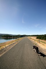 Cali on the Dam dog walk