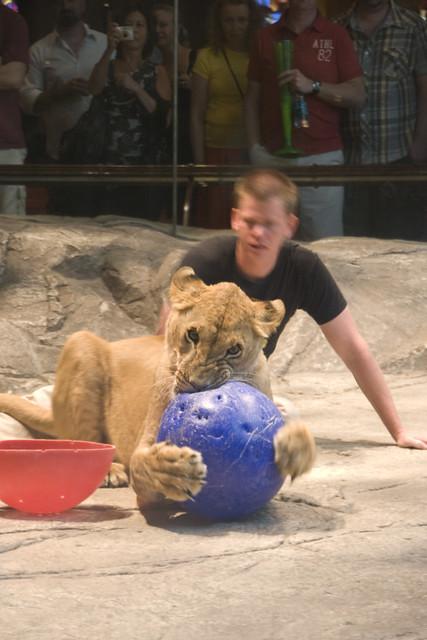 D4 MGM lions 3