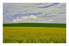 Colours of Nature (wunderbilder) Tags: blue green yellow sommer feld himmel wolken gelb gras grn blau raps