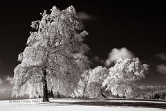 welcome to the real world (Mace2000) Tags: trees winter sky bw white snow black nature clouds germany landscape deutschland daylight shadows natur reality 5d duotone landschaft schwarzwald blackforest beech schauinsland buchen thereisnospoon img0584 mace2000 countryscenery 4invitationsdeleted