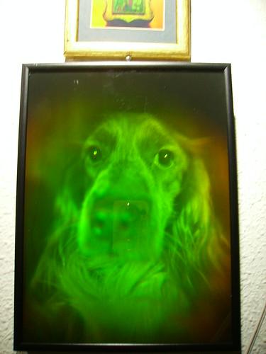 Holograma chucho