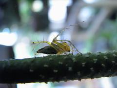 little-spider#2
