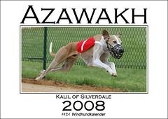 Azawakh 2008 - HD! Windhundkalender