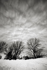 (-Antoine-) Tags: park trees winter sky bw cloud snow canada cold tree clouds quebec montreal hiver sigma wideangle nb ciel arbres filter invierno neige 1020mm polarizer nuage nuages arbre parc froid montral lafontaine filtre sigma1020mm polarizing grandangle polarisant ©antoinerouleau