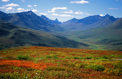 Tombstone park autumn colors (xtremepeaks) Tags: park blue autumn red sky mountain canada game mountains film clouds landscape extreme tombstone north scenic slide nopeople scan september arctic adventure mount yukon pre winner daytime monolith range rugged gmt bigmomma abigfave xtremepeaks superaplus aplusphoto pregamewinner pregamesweepwinner