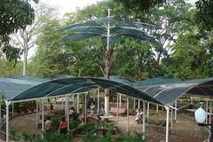ParqueTemático Bosque Macuto
